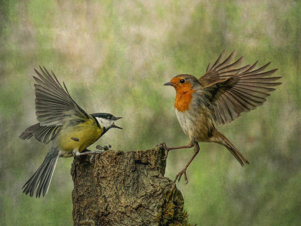 Two birds in a dispute